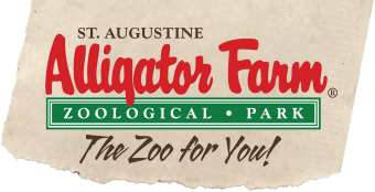 alligatorfarm.com